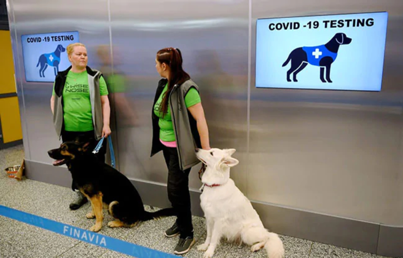 dogs at airport