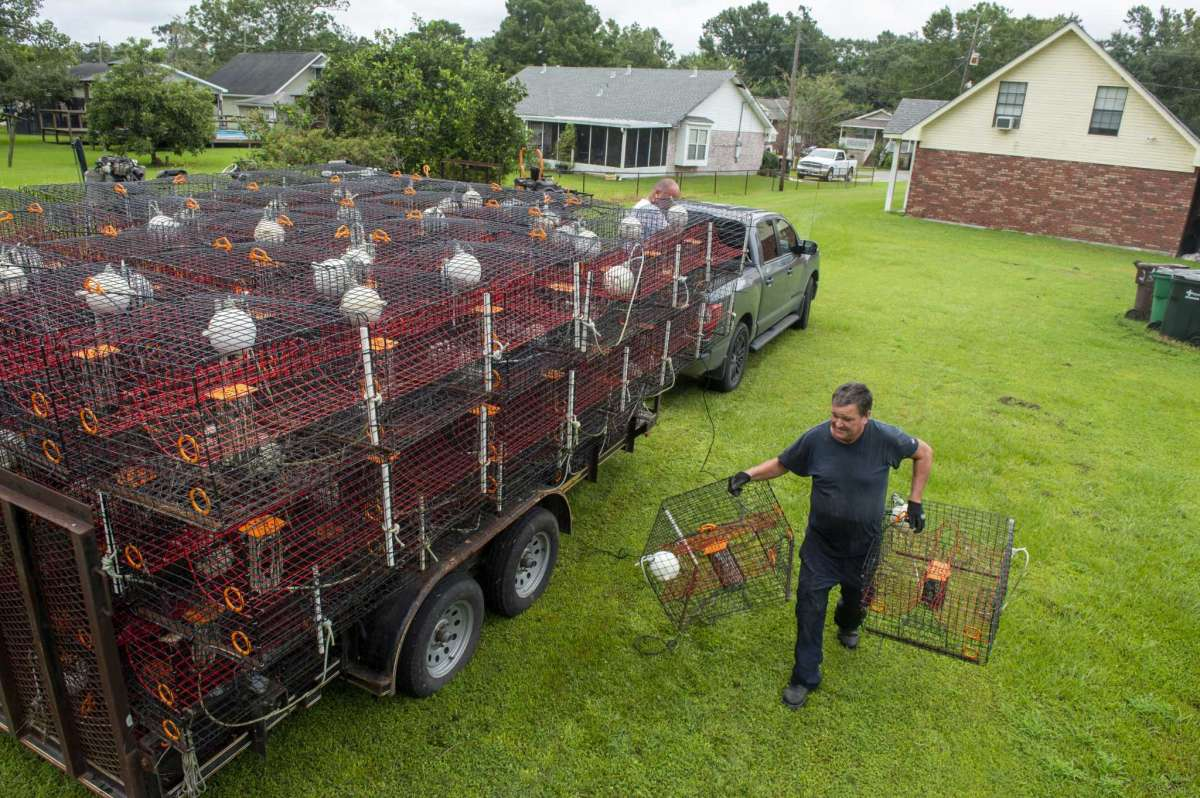 Ray Guenther, 55, bottom right, helps his brother, John, 56, unload about 400 crab traps that he had to pull out of the water and move via flatbed trailer to dry land near his home in eastern St. Bernard Parish as the Louisiana coast prepares for the arrival of Hurricane Ida on Friday, Aug. 27, 2021 in New Orleans. Hurricane Ida struck Cuba on Friday and threatened to slam into Louisiana with devastating force over the weekend, prompting New Orleans' mayor to order everyone outside the protection of the city's levees to evacuate.(Chris Granger/The Times-Picayune/The New Orleans Advocate via AP)
