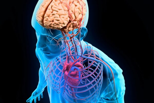 Gut and Heart Signals Affect How We See Ourselves: Weak Connections Linked to Body Shame and Weight Preoccupation