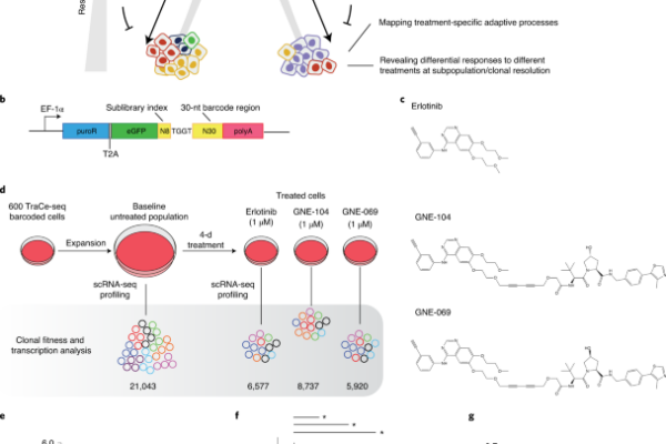 Identifying transcriptional programs underlying cancer drug response with TraCe-seq