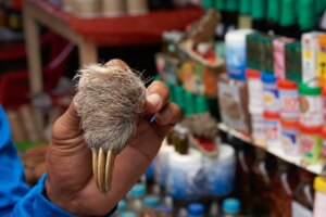 Notorious wildlife market, largest in Peruvian Amazon, back in business after pandemic hiatus